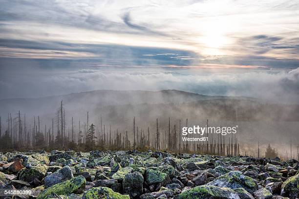 Germany, Bavaria, Lusen, Bavarian Forest National Park, Forest dieback and fog in autumn