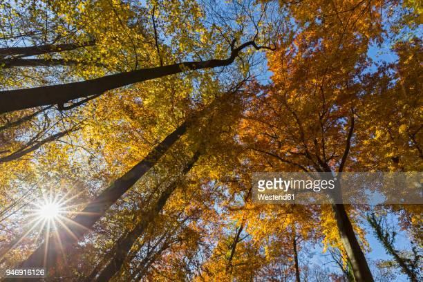 Germany, Bavaria, Munich, Deciduous trees in autumn