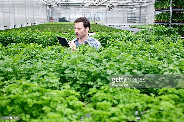 germany, bavaria, munich, mature man in greenhouse between parlsey plants with clip board - petersilie stock-fotos und bilder