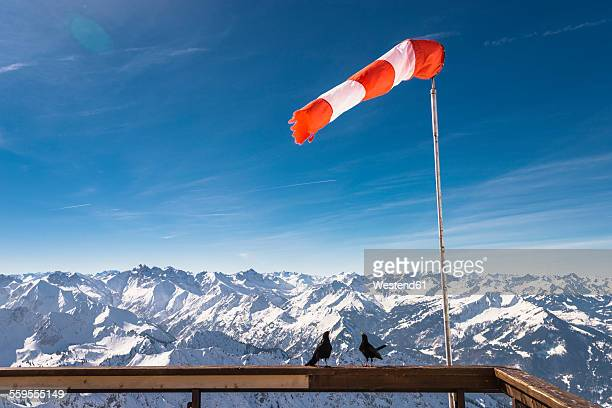 Germany, Bavaria, Nebelhorn, windsock and jackdaws on observation terrace