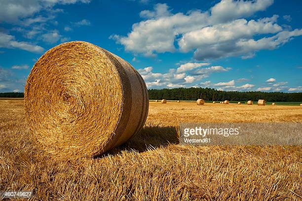 Germany, Bavaria, Nurnberg, View of rolled up bales on field