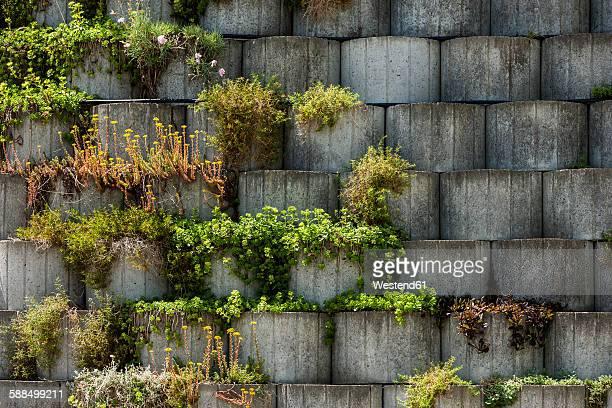 Germany, Bavaria, Otterfing, Plants in concrete stone garden