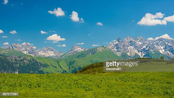 Germany, Bavaria, panoramic view of Fellhorn, alpine meadow with white hellebore