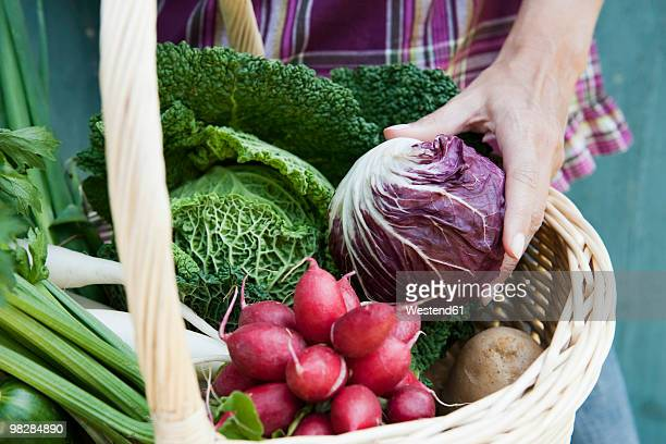 Germany, Bavaria, Woman hand holding vegetable in basket, close-up