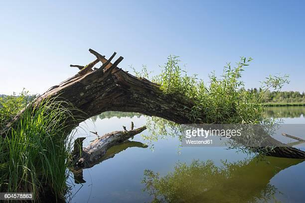 germany, bavaria, pupplinger au, icking reservoir at sar floodplains - stausee stock-fotos und bilder