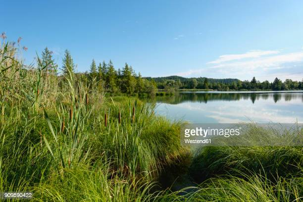 germany, bavaria, pupplinger au, nature reserve isarauen, icking reservoir - lakeshore stock pictures, royalty-free photos & images
