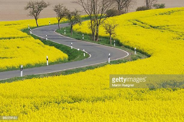 germany, bavaria, road passing rape seed field - bavière photos et images de collection