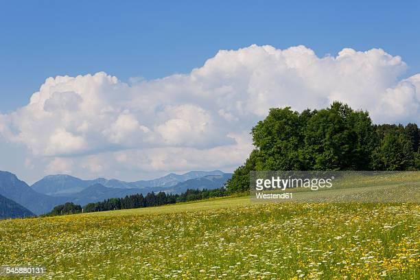 Germany, Bavaria, Samerberg, flower meadow