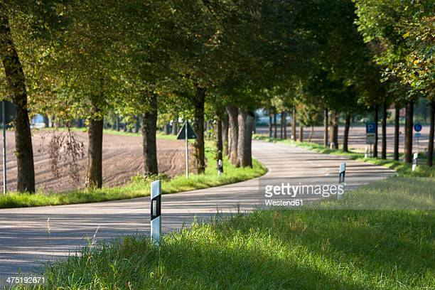 germany, bavaria, schaeftlarn, tree-lined road to schaeftlarn abbey - abbey road stock pictures, royalty-free photos & images
