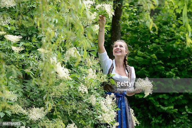 Germany, Bavaria, smiling woman wearing dirndl picking elderflowers