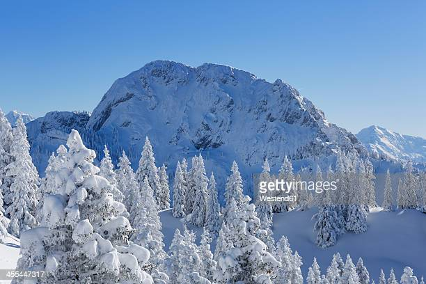 Germany, Bavaria, Snow covered spruces at Tegelberg Mountain