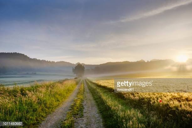 germany, bavaria, swabia, tussenhausen, field path and morning fog at sunrise, augsburg western woods nature parkield path - wetter stock-fotos und bilder