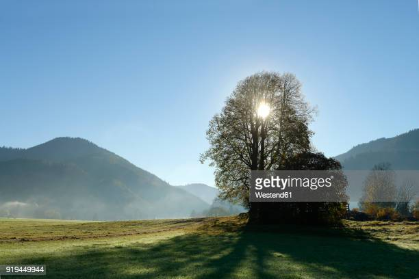 Germany, Bavaria, Upper Bavaria, Chiemgau Alps, Reit im Winkl, Gletschermuehlenfeld, field and trees against the sun