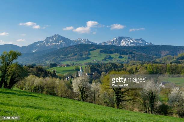 germany, bavaria, upper bavaria, chiemgau, rupertiwinkel, view to former hoeglwoerth abbey, berchtesgadener alps in the background - berchtesgaden stockfoto's en -beelden
