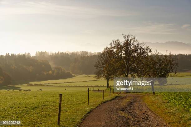 Germany, Bavaria, Upper Bavaria, Icking, landscape at morning light