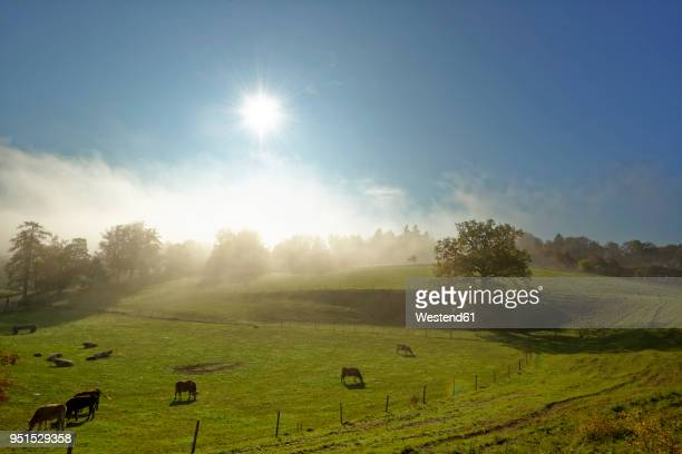 germany, bavaria, upper bavaria, icking, pasture at morning mist - rolling hills sun stock pictures, royalty-free photos & images