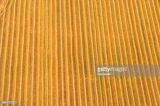 Germany, Bavaria, View of field, aerial view