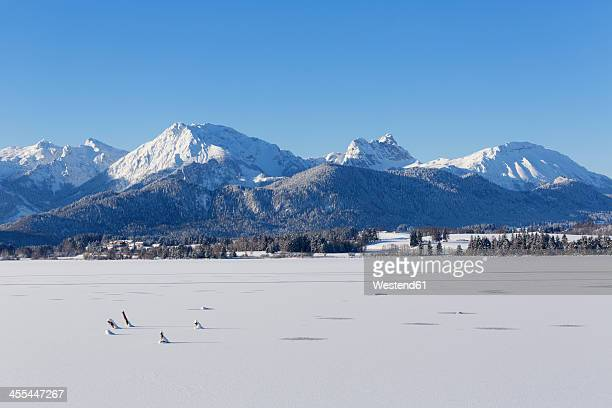 germany, bavaria, view of hopfensee lake and tannheim mountains - snowfield stock pictures, royalty-free photos & images