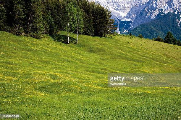 Germany, Bavaria, View of hump-meadow with karwendel mountains in background