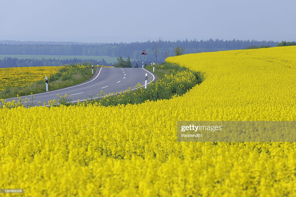 Germany, Bavaria, View of rural road with yellow flowering rapeseed field : ストックフォト