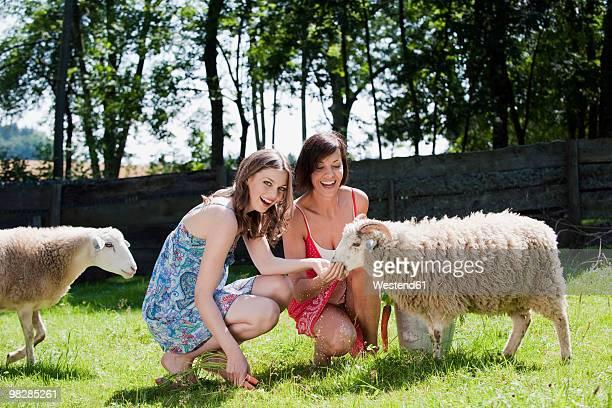 Germany, Bavaria, Women feeding sheep, smiling