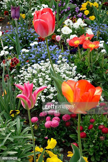 Germany, Bavaria, Wuerzburg, View of garden with tulips, Tulipa