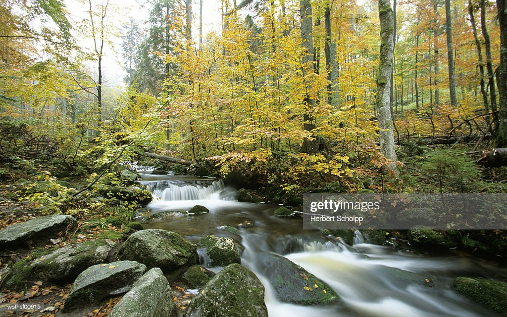 Germany, Bavarian forest, at Kleine Ohe : Stock Photo