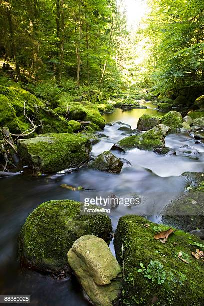 Germany, Bavarian Forest, Brook Buchberger Leite