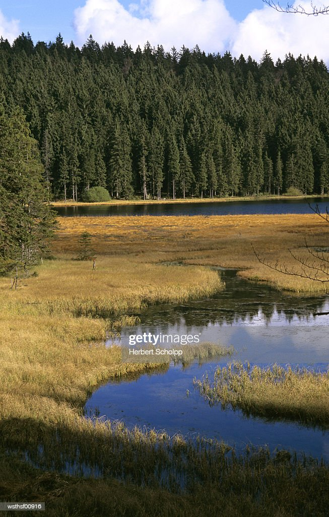 Germany, Bavarian forest, Gro?er Arbersee : Stock Photo