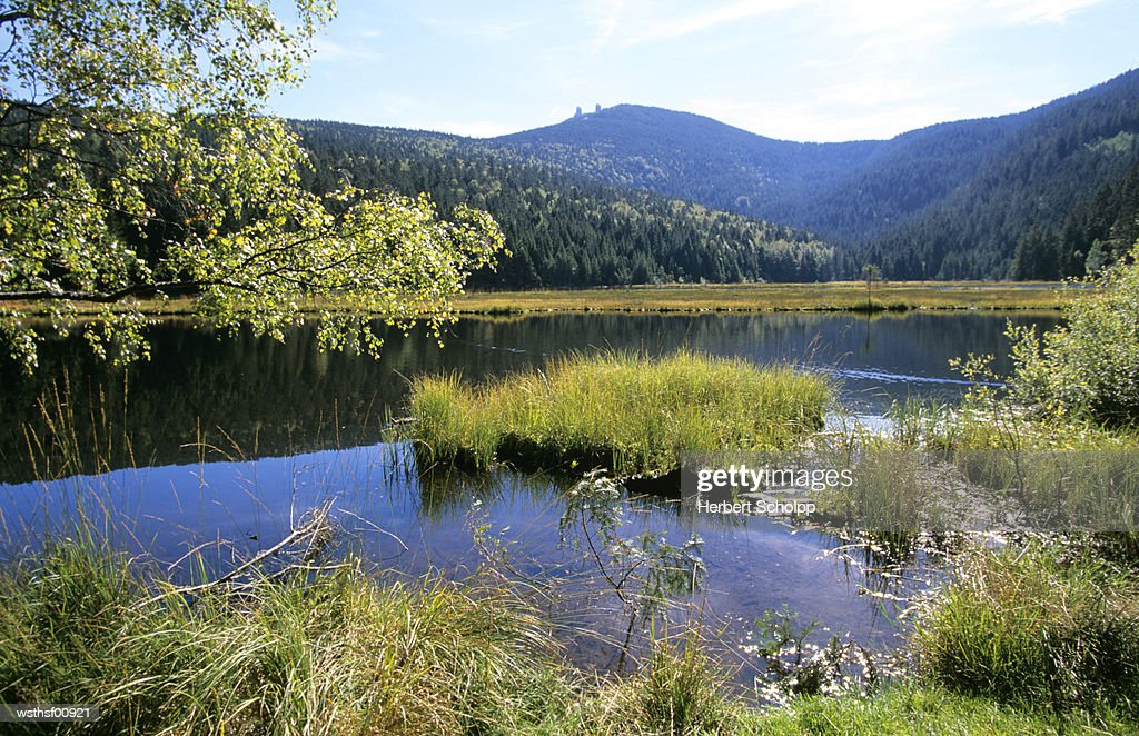 Germany, Bavarian Forest, Kleiner Arbersee : Foto de stock