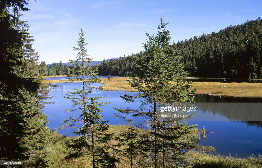 Germany, Bavarian Forest, Kleiner Arbersee : Foto stock