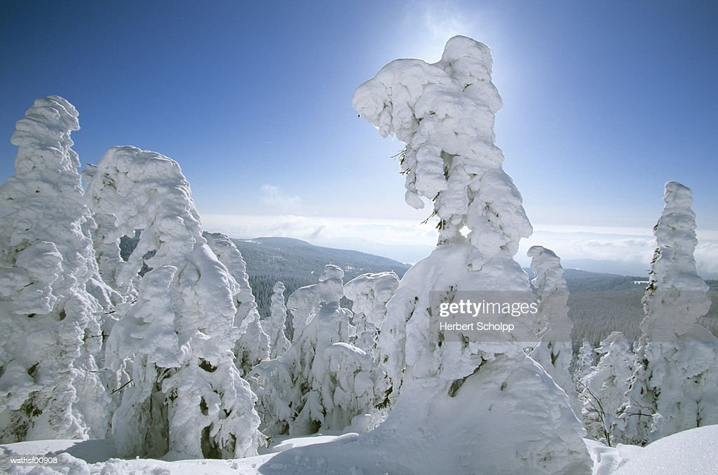 Germany, Bavarian forest, Large Arber : Stock Photo