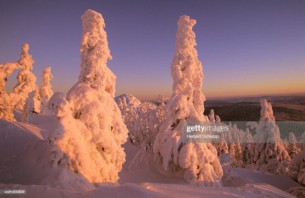 Germany, Bavarian forest, Large Arber : Foto stock
