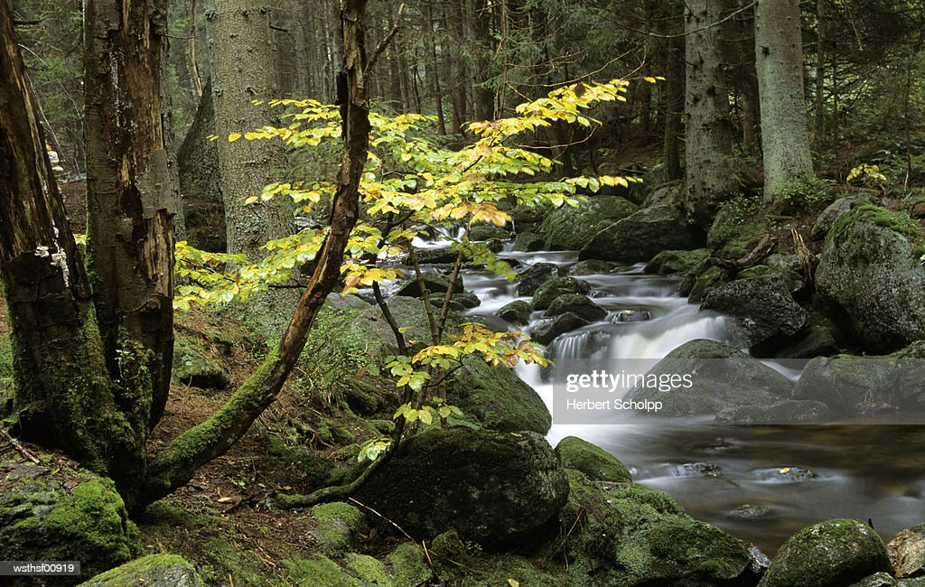 Germany, Bavarian forest, mountain stream cascading around moss-covered rocks : Stock Photo