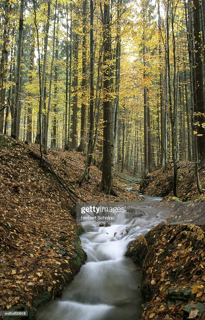 Germany, Bavarian forest, near Buchenau : Foto de stock