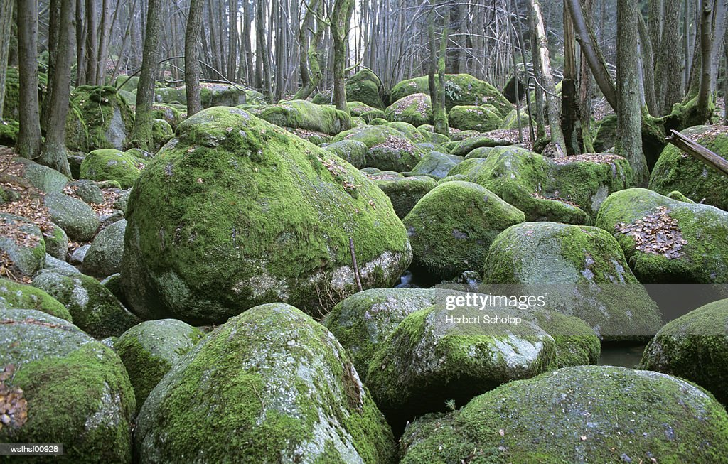 Germany, Bavarian Forest, near Falkenstein : Stock Photo