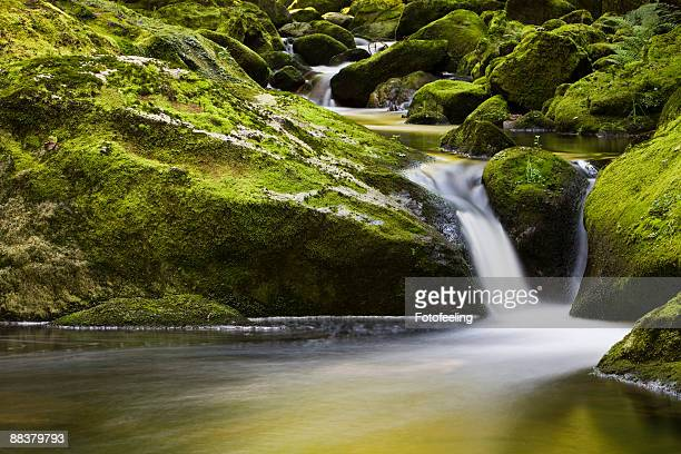 Germany, Bavarian Forest, River Buchberger Leite, Waterfall through moss covered rocks