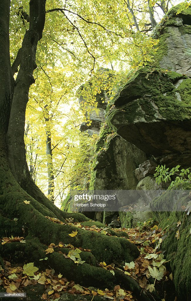 Germany, Bavarian forest, Schlo?park Falkenstein : Stock Photo