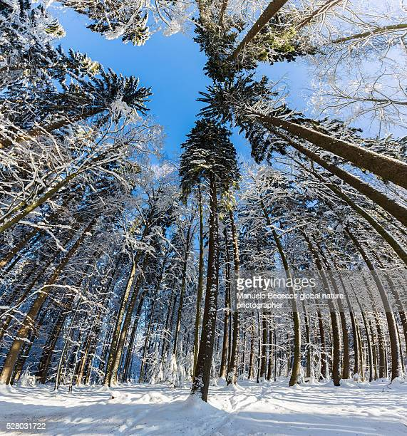 germany - bayerischer national park - bayerischer wald - wald stock pictures, royalty-free photos & images