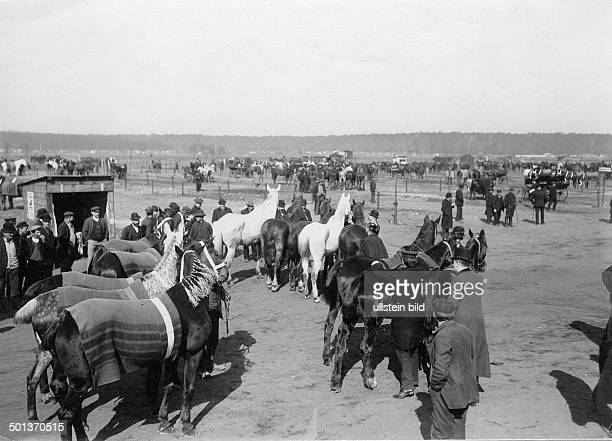 Germany Berlin cattle market horses checking by a veterinary date unknown