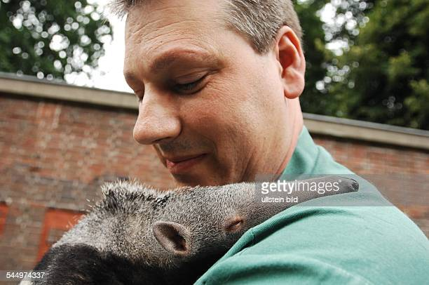Germany - Berlin - Charlottenburg : giant anteater Adolpho, born in May 2008 in the Berlin Zoo, with keeper Thomas Messinger -