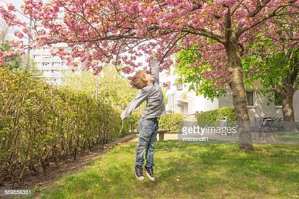 Germany, Berlin, Cherry blossom, Little boy jumping under tree