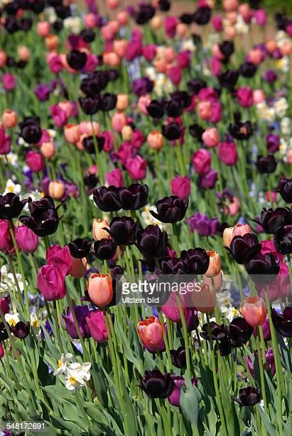 Germany Berlin Marzahn pleasure park Marzahn Gardens of the World Christian Garden tulips