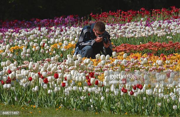 Germany Berlin Marzahn pleasure park Marzahn Gardens of the World Christian Garden man is taking photos of tulips
