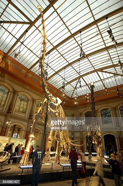 Museum of Natural History main hall with skeleton Brachiosaurus brancai