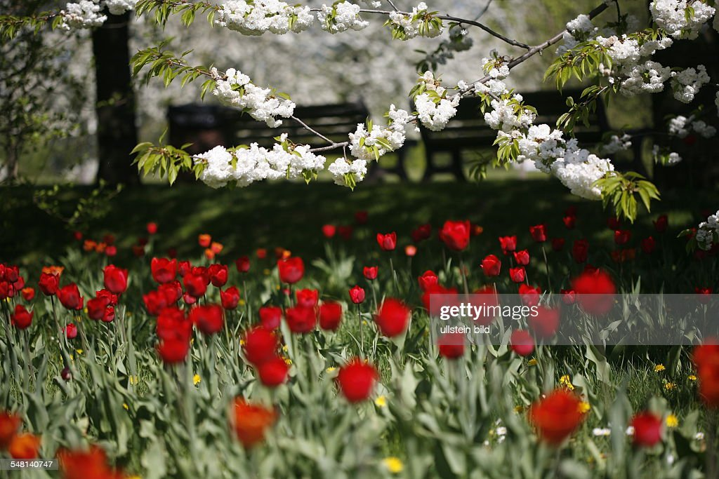 Britzer garten tulipan 2019