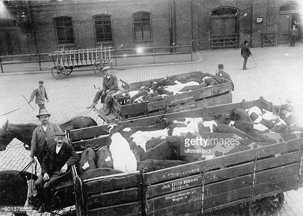 Germany Berlin slaughterhouse transportation of cattle date unknown