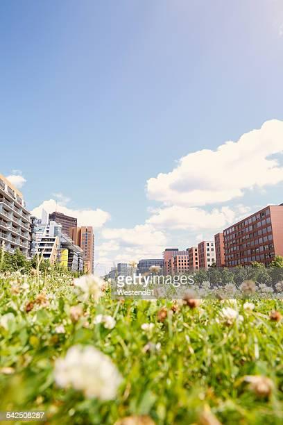 Germany, Berlin, summer meadow near Potsdam Square