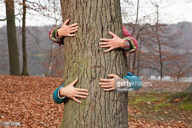 germany, berlin, wandlitz, couple hugging tree - tree hugging stock pictures, royalty-free photos & images