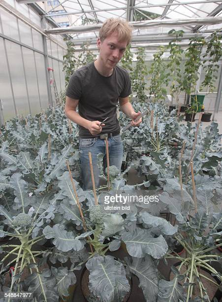 Germany Berlin Wedding Beuth Technival University Berlin student is researching the growth of the broccoli plant during drought